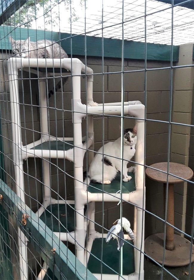 Kitties in their Korner